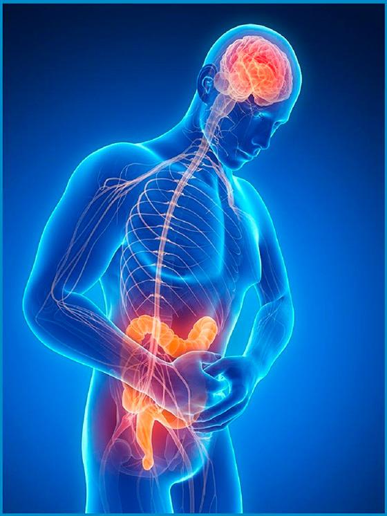 conexión entre el intestino y el sueño
